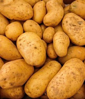 Doven sofa-kartoffel
